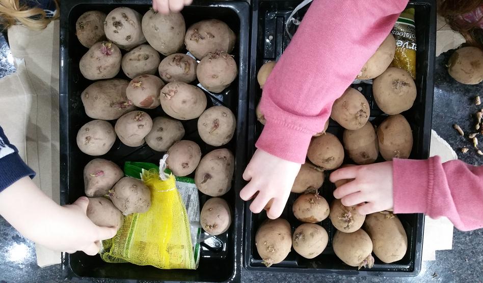 Mr 'Seed' potato head