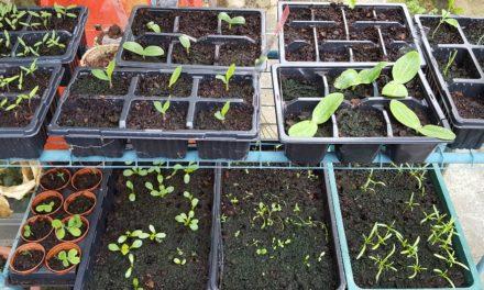 Seedling Success!