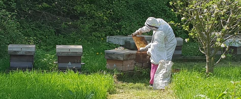 It's Bee-n Busy…